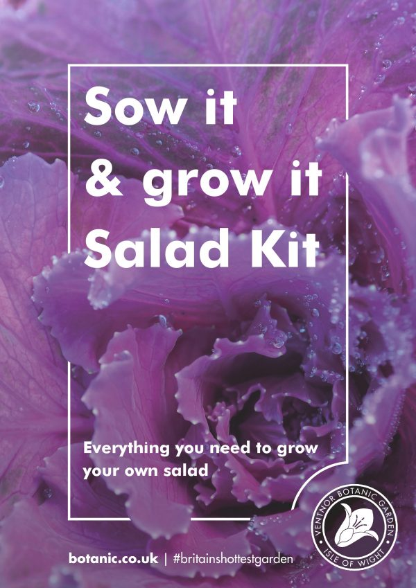 Sow it and Grow it Oriental Salad Kit